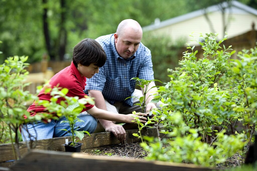 Father and son planting vegetables