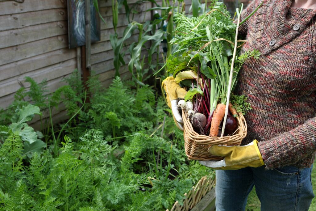 Woman holding basket with fresh vegetable from the garden
